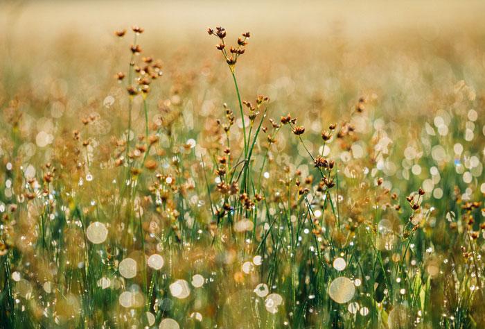 floral-grasses